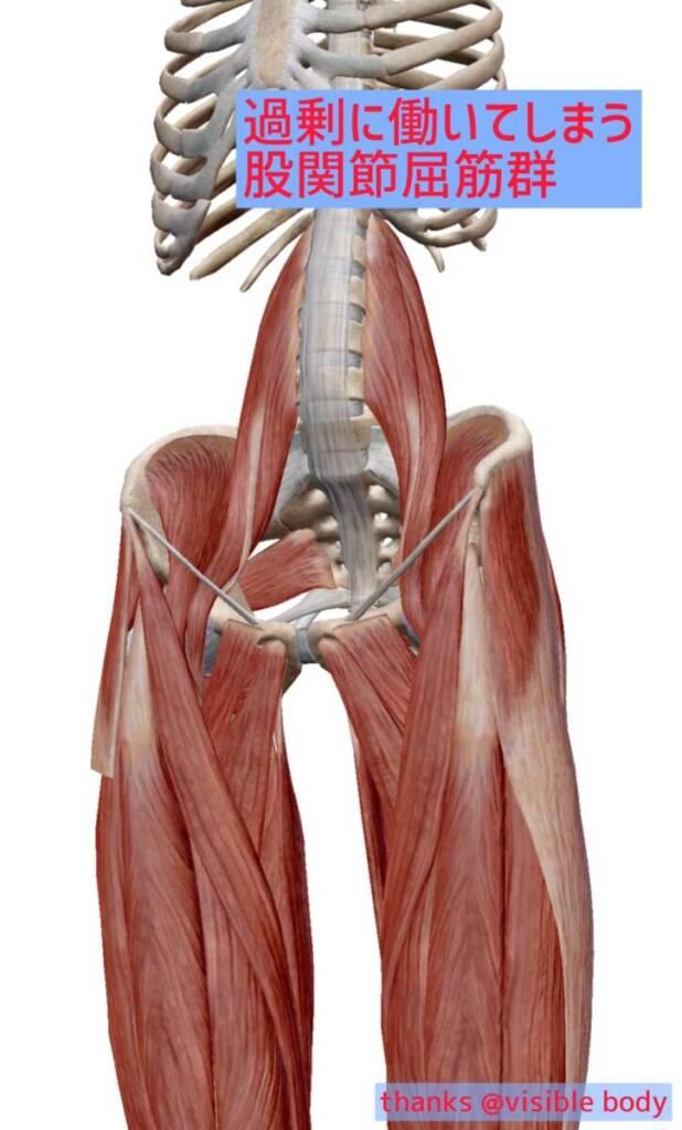 過剰に働いてしまう股関節屈筋群